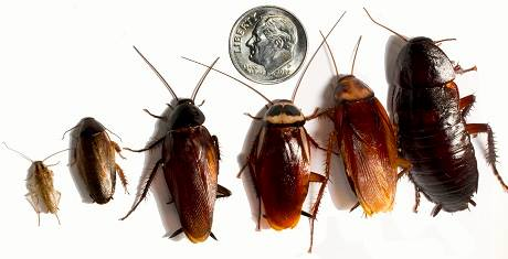 Cockroach Prevention Tips in The Home