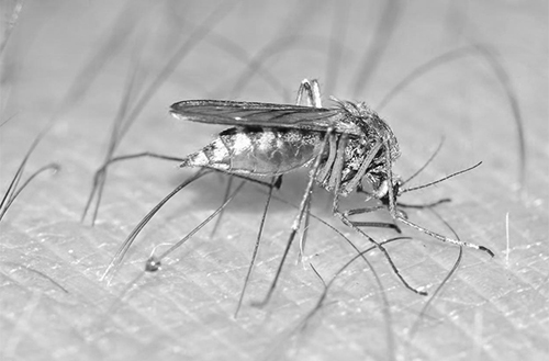 Entomologist Developing New Zika Detection Method | B&B Pest