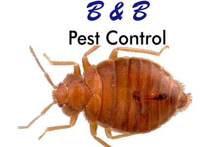 5 Helpful Bed Bug Tips | B&B Pest Control