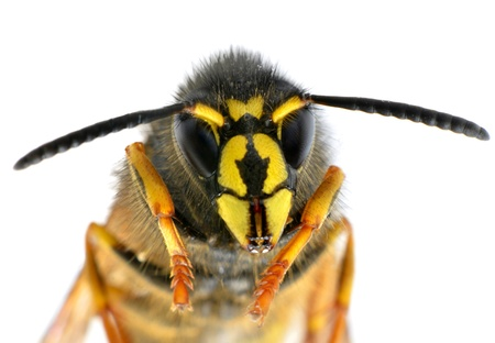 A Woman Sues A Golf Club After Wasp Sting Her