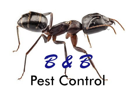 7 Summer Time Ant and Roach Tips | B&B Pest Control