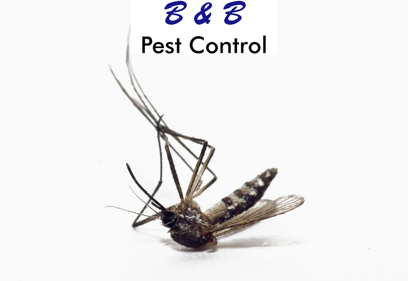 Mosquitoes During The Winter | B&B Pest Control
