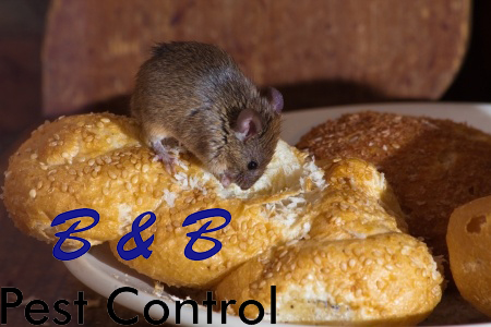 5 Summer Rodent Control Tips | B&B Pest Control