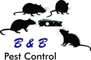 South Boston Rodent Control