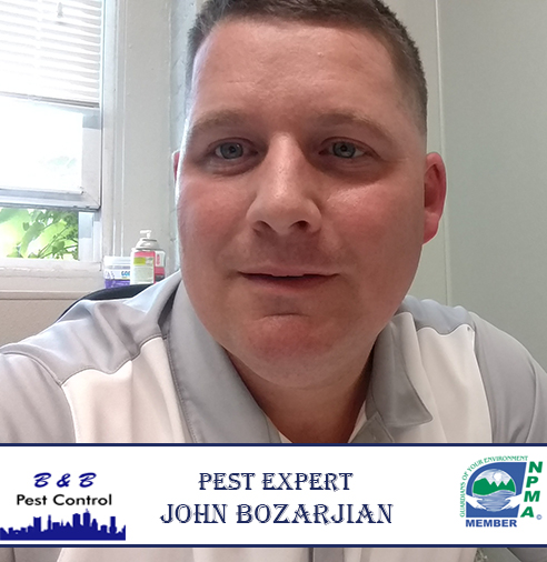 Rodent Prevention Tips From Expert John Bozarjian | B&B Pest