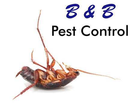 B&B Pest Control Offers Cockroach Prevention Tips