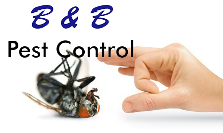 A Single Fly Can Make You Sick | B&B Pest Control
