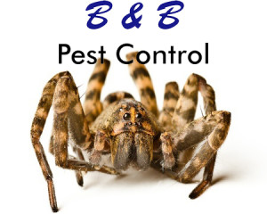 South Boston Pest Control