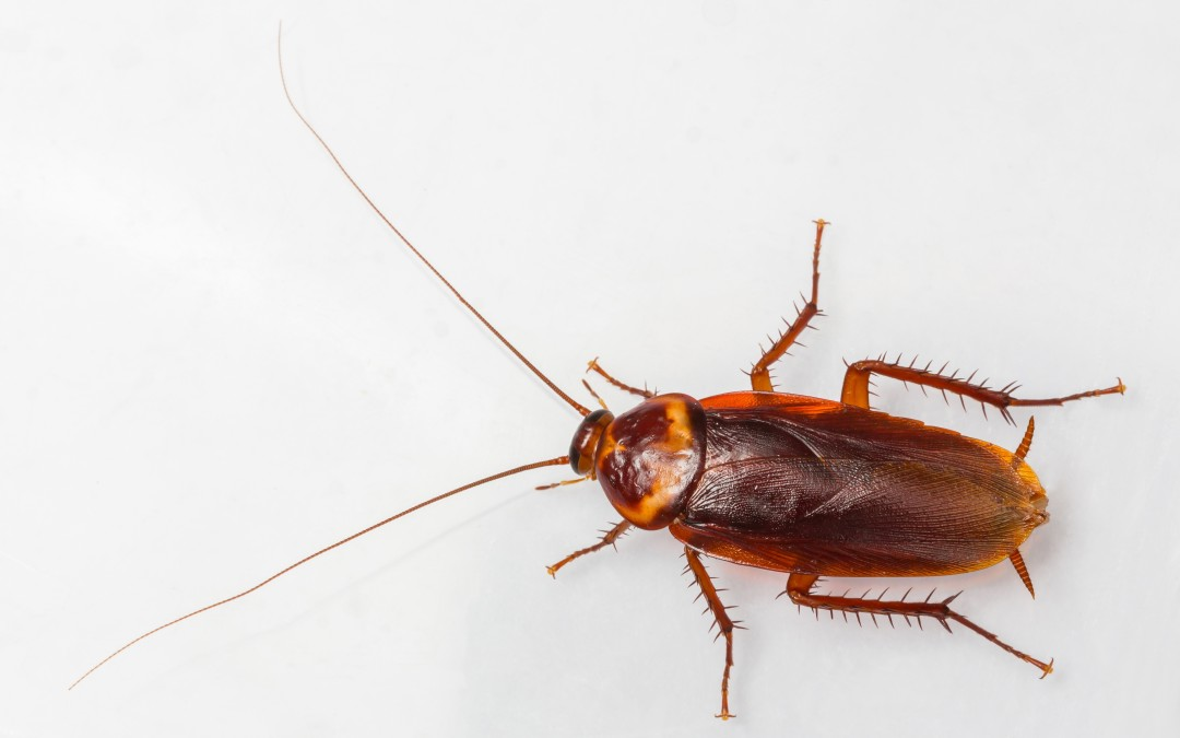 The Cowardly Glowing Cockroach That Disguises Itself As A Toxic Predatory Insect