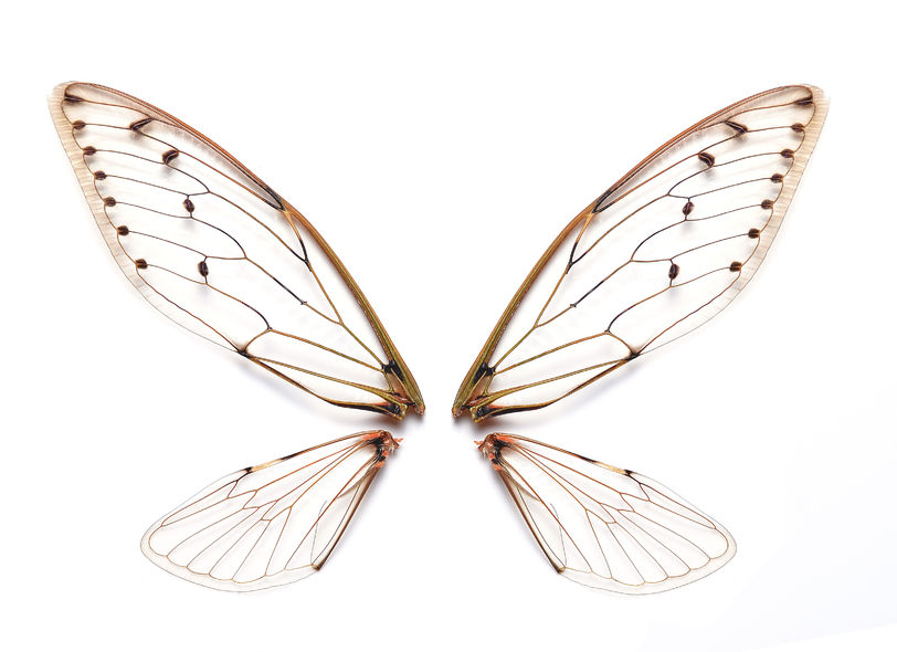 Computer Technology To Understand The Development Of Vein-Patterns On Insect Wings