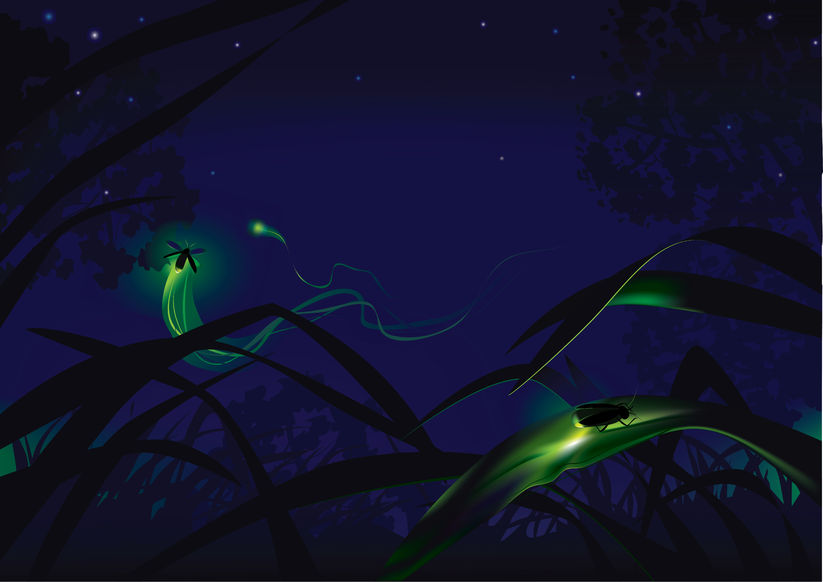 Do Fireflies Control Their Glow?