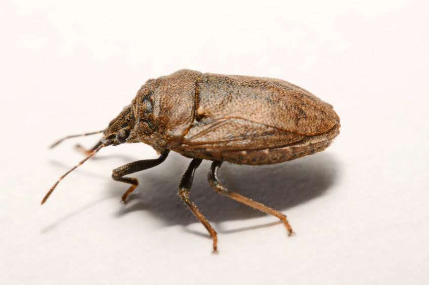 As A Result Of The Recent Cold Spell That Swept The Midwest And East Coast, One Of The Most Notorious Invasive Insect Pest Species To Homes May Have Been Wiped Out
