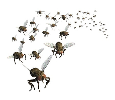 Factors That Draw Filth Flies Toward Properties And Into Homes, And How Homeowners Can Easily Prevent Fly Pest Issues