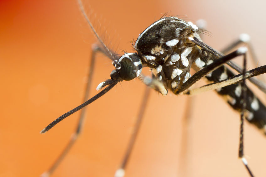 Everything Residents Should Know About The Invasive Asian Tiger Mosquito In Massachusetts, And Their Potential For Transmitting Disease